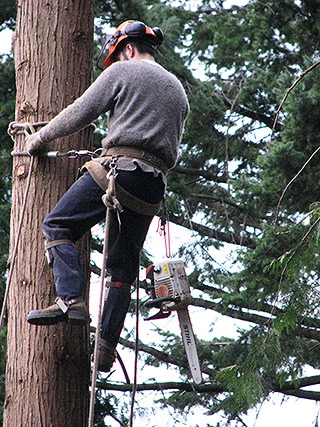 Tree Service, Sunshine Coast, BC
